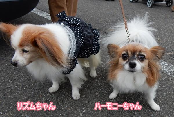 リズムちゃん&ハーモニーちゃん