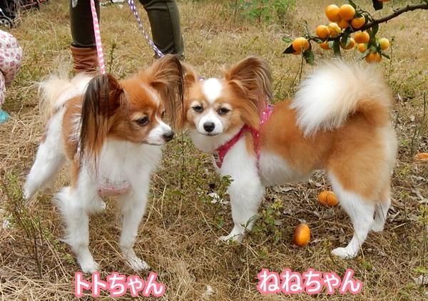 ねねちゃん&トトちゃん
