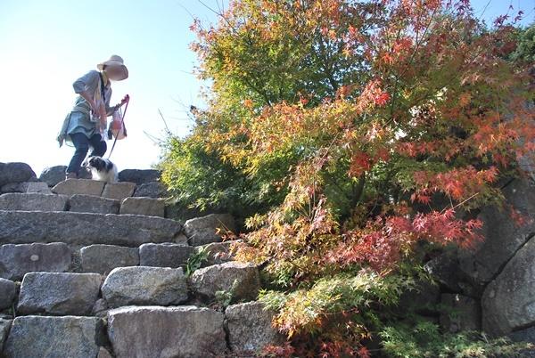 新櫓跡石段の紅葉