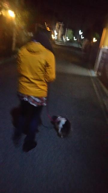 姉ねと夜散歩