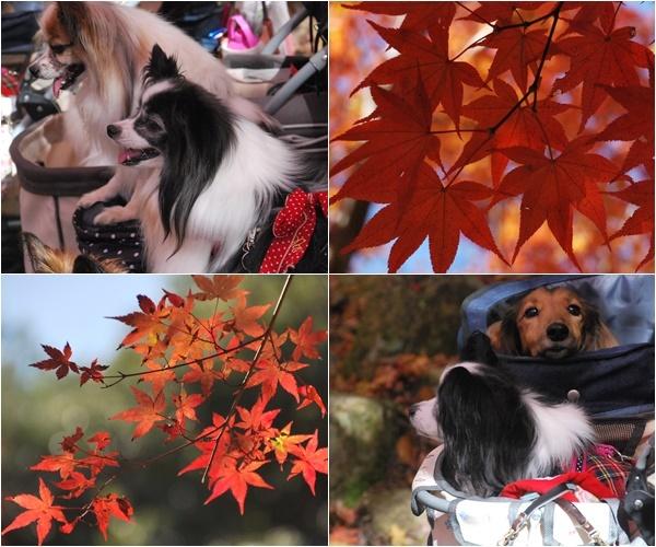 紅葉とスナップ写真