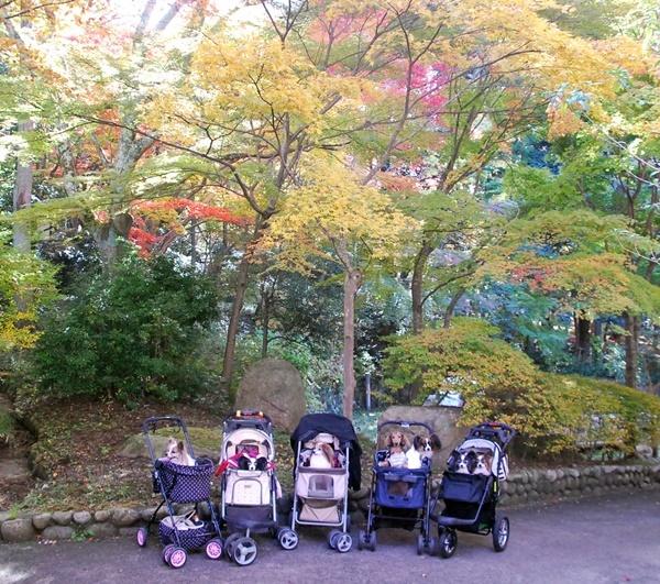 瑞宝寺公園集合写真1