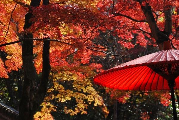 紅葉と赤い傘