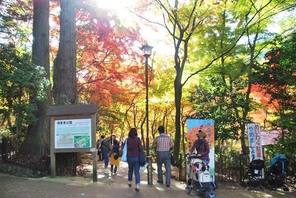瑞宝寺公園入口の紅葉