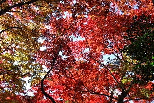 上から見た紅葉