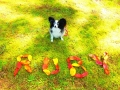 葉っぱ文字ruby