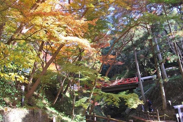根来寺紅葉赤い橋