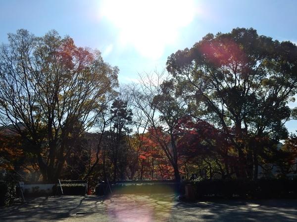 根来寺紅葉(塀の外側から)