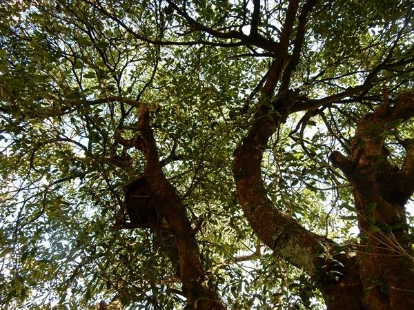 木の上に巣箱