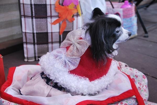 ルビークリスマスマントで