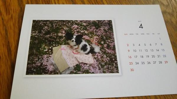 4月ピンクのじゅうたん