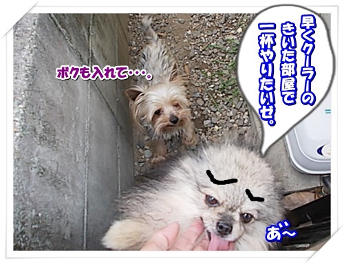 DSCN9146_2016070412324701d.jpg