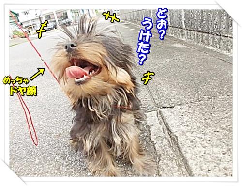 DSCN9298_2016072911093509e.jpg