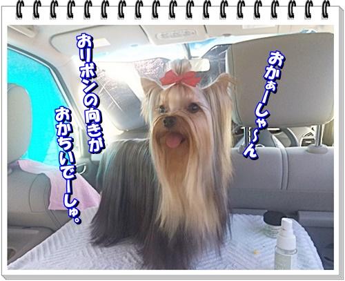 IMG_3866.jpg