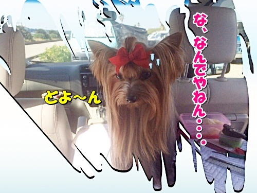 omawzaki2.jpg