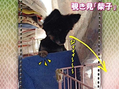 shibako1.jpg