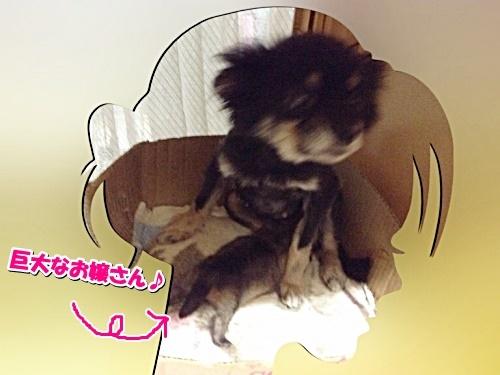 shibako3.jpg