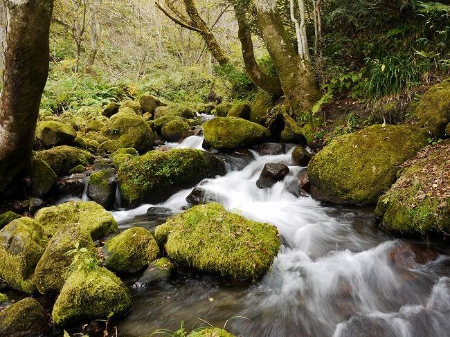 木谷沢渓流
