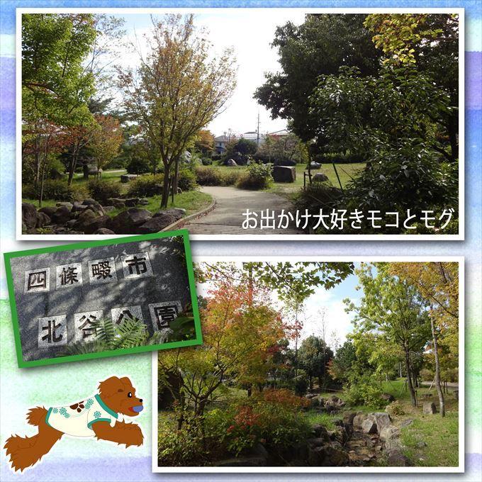 390_20161106104337c29.jpg
