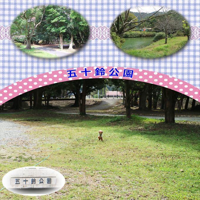 441_20161120133535602.jpg