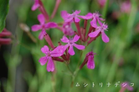 mushitorinadeshiko58.jpg