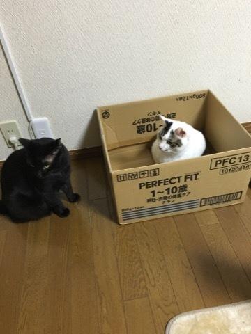 箱入りおそめちゃん