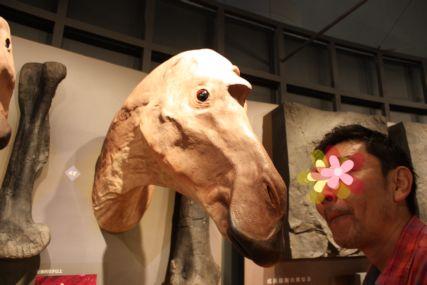 2016sep19恐竜博物館一般