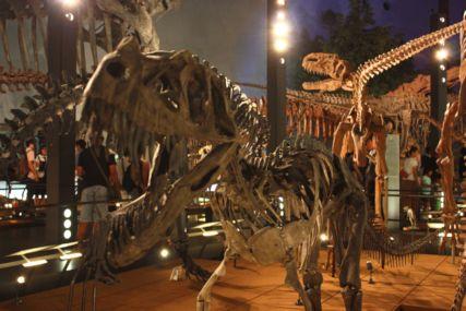 2016sep19恐竜博物館一般3