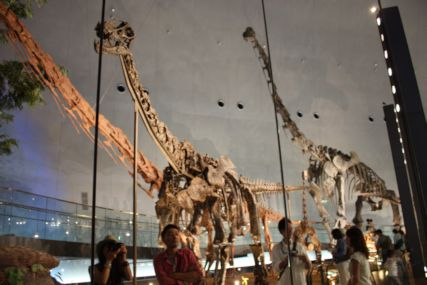 2016sep19恐竜博物館一般4