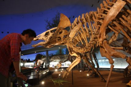 2016sep19恐竜博物館一般8