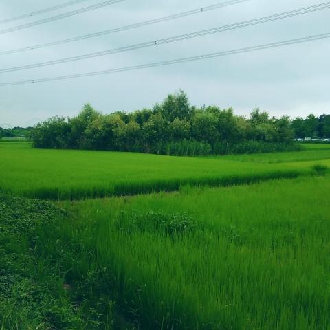 水田の一角