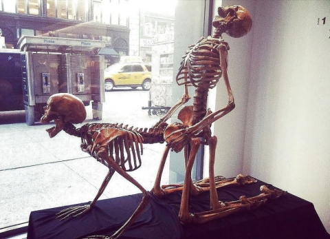 骸骨でGO