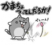 ボンレス猫