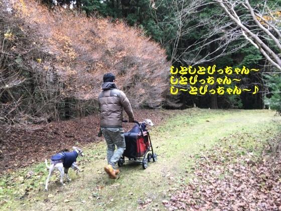 IMG_1013_20161127000639e12.jpg