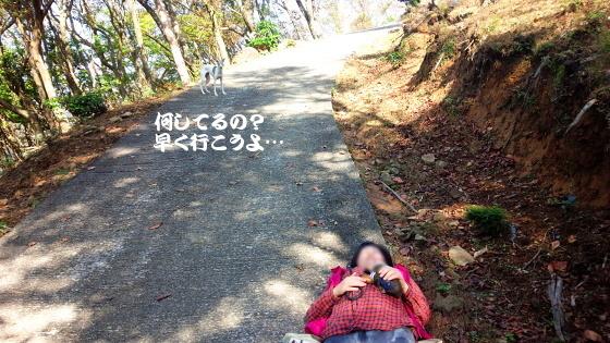 IMG_20161106_111249.jpg