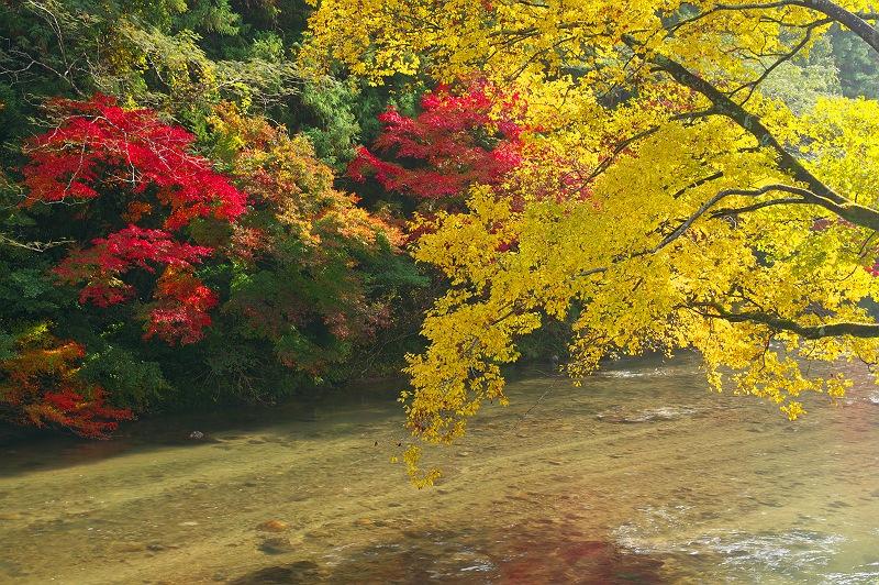 巴川の紅葉