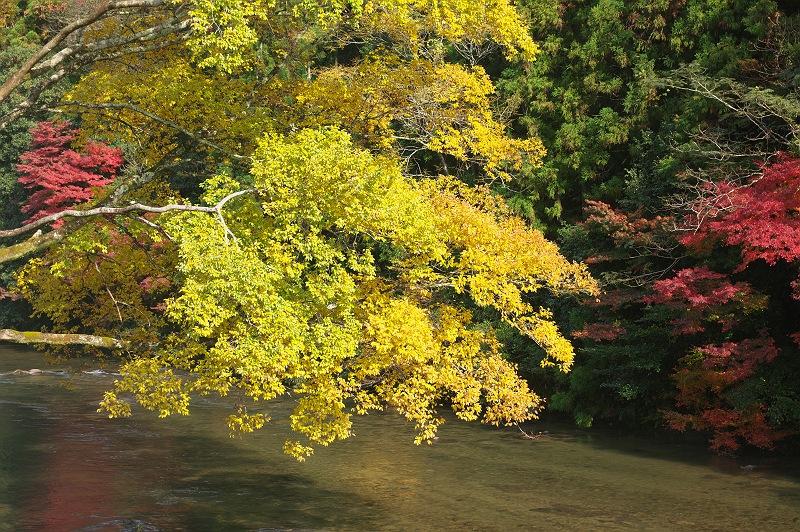 巴川の紅葉 4