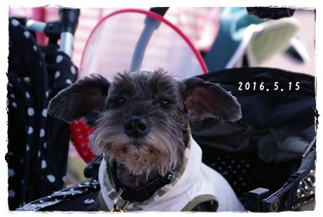 20160515-15.jpg