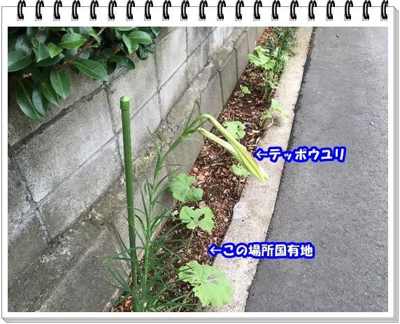 2691ブログNo2