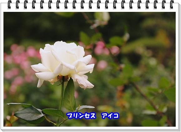2785ブログNo7