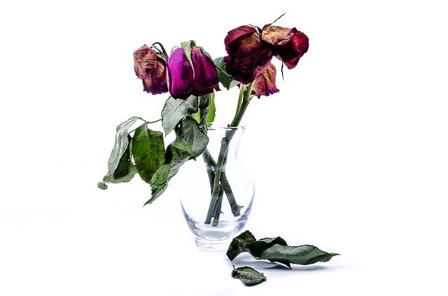 flower-314658_640.jpg