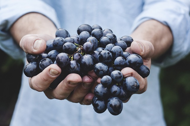 grapes-690230_640.jpg