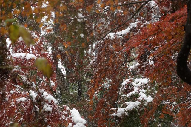 もみじもくすむ雪景色
