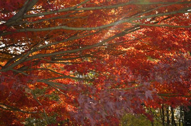 綺麗な紅葉