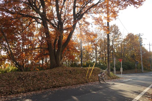 日野のとある紅葉