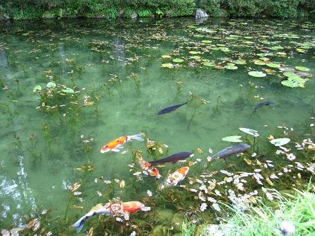 モネの池(7D)