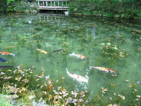 モネの池1(7D)