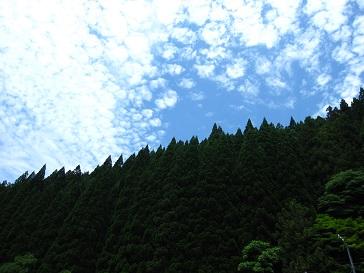 青空と杉が綺麗だった~(≧▽≦)♪