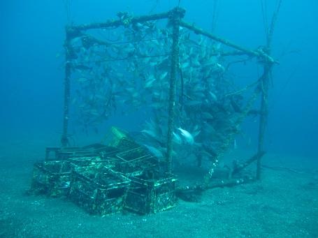 ミニ漁礁にわいわいわい♪