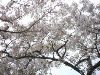 416hiyoriyama.jpg